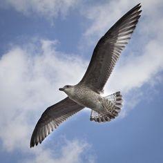 💚 Get this free picture Kite Bird Hawk    🆓 https://avopix.com/photo/16256-kite-bird-hawk    #kite #bird #hawk #animal #wildlife #avopix #free #photos #public #domain