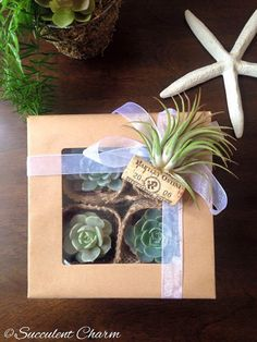 Succulent Charm Gift Box // 4 Assorted Succulents + 1 Decorative Tillandsia ( air plant ) Cork Magnet // Gifts