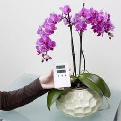 Consigli per la cura, Phalaenopsis < Consigli per la cura | optiflor.nl