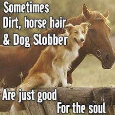 Sometimes dirt, horse hair and dog slobber are just good for the soul. - Sometimes dirt, horse hair and dog slobber are just good for the soul. Funny Horses, Cute Horses, Horse Love, Beautiful Horses, Animals Beautiful, Cute Animals, Funny Horse Sayings, Cowboy Quotes, Dog Quotes
