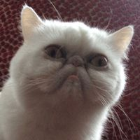 My dream cat So UGLY it's adorable
