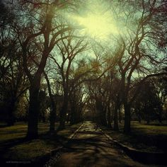 Shaded pathway, Edinburgh Gardens, Melbourne