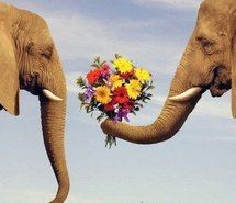 Inspiring picture animal, elephant, flowers, funny. Resolution: 500x483 px. Find the picture to your taste!