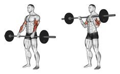 Exercise Database - Wide-Grip Standing Barbell Biceps Curl — Jase Stuart - The Better Body Coach Big Biceps Workout, Biceps And Triceps, Back And Biceps, Dumbbell Workout, Biceps Curl, Huge Biceps, Weight Training Workouts, Body Weight Training, Gym Workout Tips