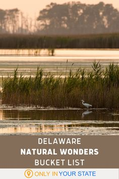 Delaware nature lovers will have a blast exploring all the beauty that the First State has to show off. Check out these natural wonders this year. Fenwick Island, Brandywine Valley, Rehoboth Beach, Hidden Beach, Local Attractions, Bays, Ocean Beach, Usa Travel, Natural Wonders