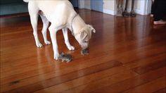 Dog meets bunnies http://ift.tt/2ohoqWo