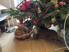 Romeo, Orazio e Regina. I miei dolci regali sotto l'albero di Natale.
