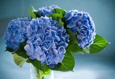 Blommors betydelse