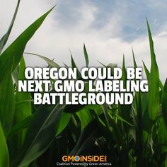 Oregon Could Be Next GMO Labeling Battleground. More Here: http://ijpr.org/post/oregon-could-be-next-gmo-labeling-battleground
