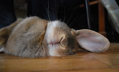 let sleeping bunnies lie.