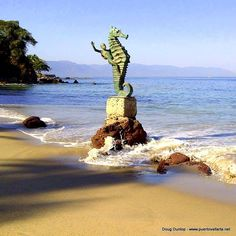 Playa Los Muertos (Deadman's Beach) is the most popular, the best known and the most visited beach in Puerto Vallarta. You'll find it south of the Malecon and the Cuale river, Venustiano Carranza to the south it's called Los Muertos.