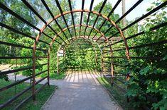 виноградник на даче - Поиск в Google