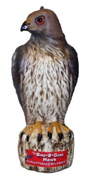 The Bird B Gone Hawk Decoy Is The First Red Tailed Hawk Decoy Available In  Todayu0027s Market And Is Used The Same Way As Owl Decoys To Scare Birds From  Open ...