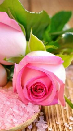 Captivating Why Rose Gardening Is So Addictive Ideas. Stupefying Why Rose Gardening Is So Addictive Ideas. Beautiful Pink Roses, Pretty Roses, Purple Roses, My Flower, Pink Flowers, Beautiful Flowers, Bouquet, Rosa Rose, Rose Wallpaper