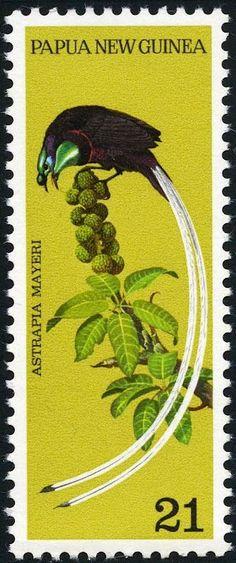 Papúa Nueva Guinea - Ave del Paraíso Cuelgacintas