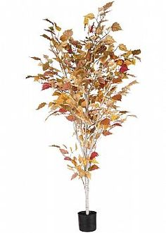 Leaves are Falling - Διακοσμητικό Φθινοπωρινό δέντρο Σημύδας σε γλάστρα 120cm