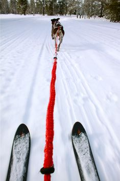 skijoring http://pinterest.com/fancybt/lovely-dog/ Wanna try this someday...first i need a dog. X]