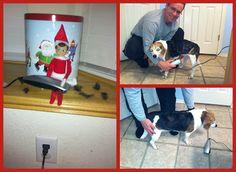 Elf on the Shelf - Dog Groomer Elfy!