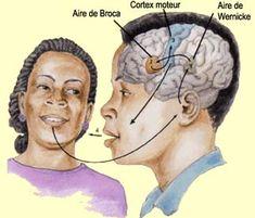 Langage et cerveau, nouvelle approche