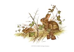 A large print of the Cottontail Rabbit painted by James Lockhart for the book Wild America. Bookplate is 15 inches wide and 12 inches tall. by Blossomprintsandmore on Etsy