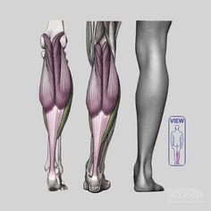 anatomy next - Cerca con Google