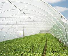 【IoT×農業】「e-kakashi」が変える農業の姿●特集「IoTの現在」|WD ONLINE