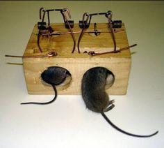 12 mejores im genes de trampas para ratas mouse traps - Como matar ratones ...