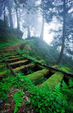 moss covered tracks in the incredible Jiancing Historic Trail in Taipingshan National Forest in Taiwan. The trail was built along an old logging railway at an elevation of 1,950 meters (6,398 ft).