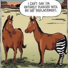 Animal Humor.....Haha! Must at least have a grin