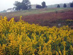 The Meadow, Longwood Gardens