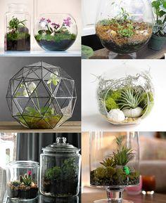 Plant Terrariums DIY