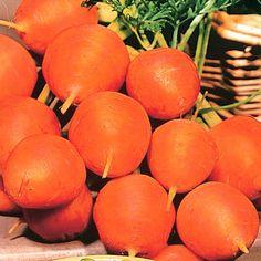 Carrot Parmex::..*•#~~$??*