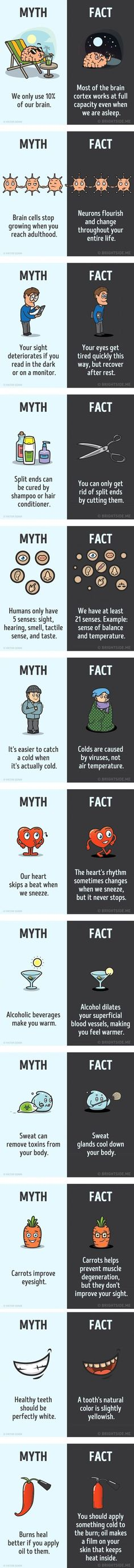 Science myths and facts about the human body