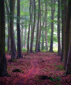 https://flic.kr/p/9Qw2Kn | Misty Friston Forest