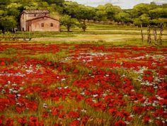 Poppy Hunting in Tuscany