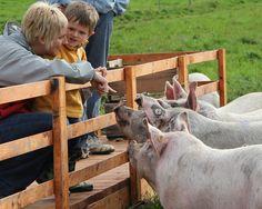 Ferme des Hautes Terres Saint Remi, Petting Zoo, Zoo Animals, Pets, Farm Gate, Animals And Pets
