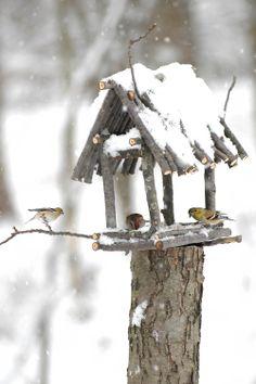 Build a Rustic Bird Feeder