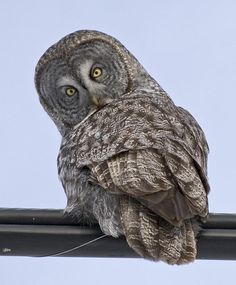 Owls are such interesting creatures.