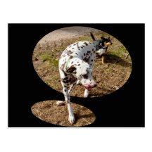 Dalmatian_Popout_Art,_ Postcard