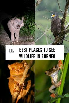 Discover the most iconic Borneo animals and the best places to see wildlife in Borneo, including Sabah, Sarawak and Kalimantan locations Malaysia Itinerary, Malaysia Travel, Asia Travel, Malaysia Trip, Travel Tips, Rainforest Map, Borneo Rainforest, Kuala Lumpur, Tahiti