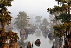 Nature  By Gregory Anderson, shot in Wewahitchka  Foggy morning at Dead Lakes State Recreation Area — a state park near Tallahassee.