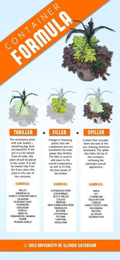 Consider this basic formula to create successful container arrangements: Thriller + Filler + Spiller. Consider this basic formula to create successful container arrangements: Thriller + Filler + Spiller. Container Flowers, Container Plants, Container Gardening, Gardening Tips, Organic Gardening, Succulent Containers, Gardening Vegetables, Growing Vegetables, Succulent Ideas