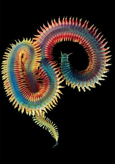 Perinereis nuntia (aka voted most beautiful worm) by Alexander Semenov underwater photography.  Find his work on Flickr, too.  Idea: pieced and applique quilting.