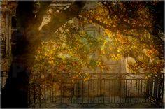 Tür hinterm Herbstbaum