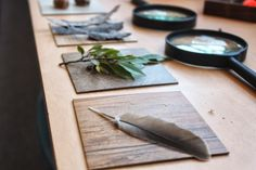 scrumdilly-do!: the nature and science table