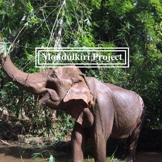 The Mondulkiri Project is located east of Phnom Penh. The Mondulkiri Project rescue overworked elephants so that they can retire away from elephant rides Elephant Sanctuary, Cheap Web Hosting, Ecommerce Hosting, Cambodia, Projects, Travel, Log Projects, Voyage, Trips