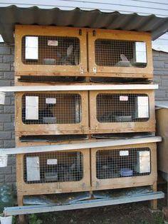 клетки для кроликов - Поиск в Google