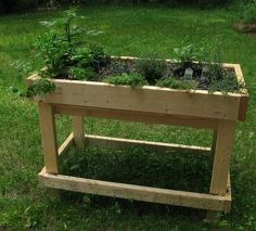 Raised veggie bed made from wood
