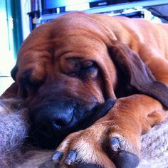 Sleeping biggie :) Cool Pictures, Pets, Animals, Animales, Animaux, Animal, Animais, Animals And Pets