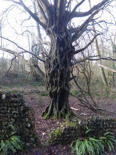l'arbre mystérieux à découvrir sur chemin de randonnée.